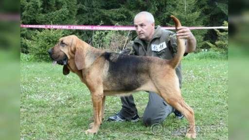 Bloodhound - Bloodhound (084)