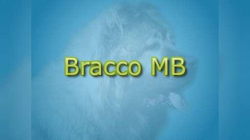Bracco MB - Boerboels and Caucasian Shepherd Dogs - braccomb